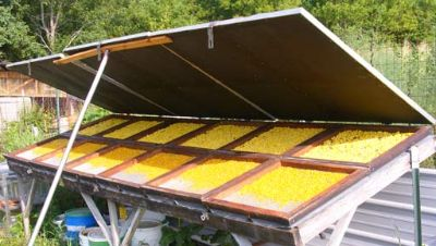 Güneş Tahıl Kurutulması