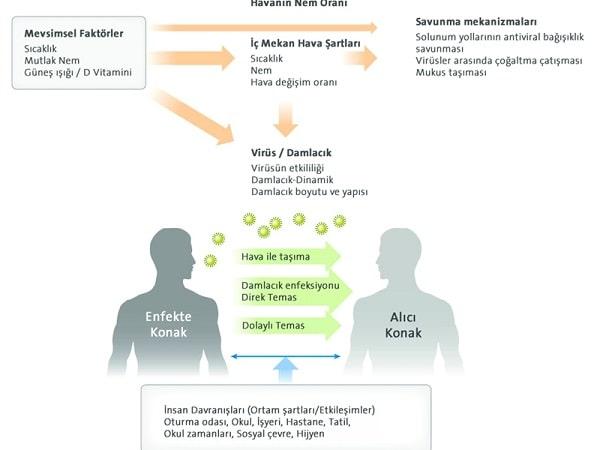 Mevsimsel Virüsler